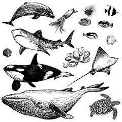 Set of hand drawn sketch style marine animals and tropical fish isolated on white background. Vector illustration.