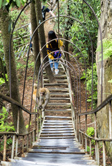 A monkey going uphill though a curly metal stars hanger at Yuanjiajie Mountain, Wulingyuan Scenic Area, Zhangjiajie National Forest Park, Hunan Province, China, Asia