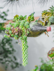 Green plant growing on a suspended reused soda bottle. Pet bottle used as a aerial vase for a plant.