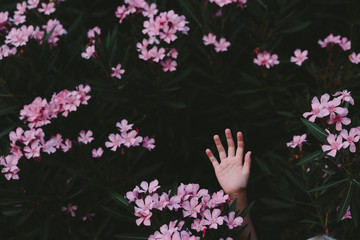 Kid's hand among the flowers