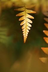 Fresh golden fern leaf