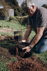 Planting a small tree in the ground