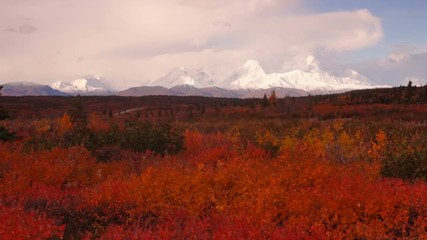 Fototapete - Extreme Vivid Autumn Leaves in Forest Near Mt Mckinley