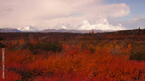 Wall mural Extreme Vivid Autumn Leaves in Forest Near Mt Mckinley