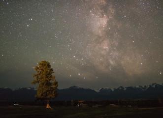 Starry night in field