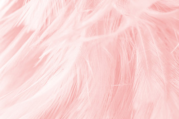 soft pink vintage color trends chicken feather texture background