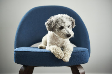 Very Cute Dog on Chair