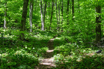 Hiking trail in Michigan in Manitou national Forest