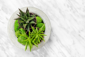 Succulent plants in concrete planter on marble background