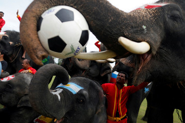 Elephants pose for a photo after they played soccer during an anti-gambling campaign for school children in Ayutthaya