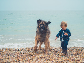 LIttle toddler with big dog on the beach