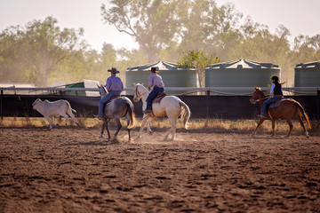 Cowboys And Cowgirl Herding A Calf At Rodeo