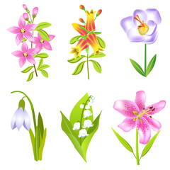 Vector collection of garden flowers