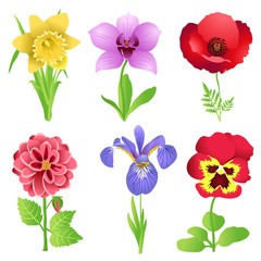 vector set of garden flowers