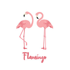 Pink Flamingo birds on white background