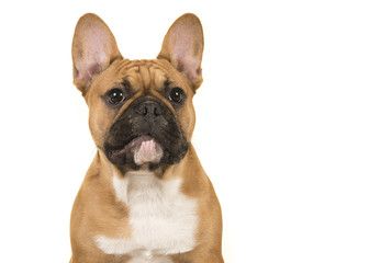 Papiers peints Bouledogue français Portrait of a french bulldog looking away isolated on a white background