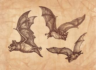 Три летучие мыши, рисунок тушью, стиль ретро.