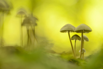 Toadstools in a art abstract ambiance in the forest