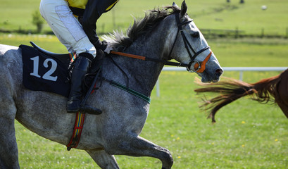 Close up on grey race horse running on the track