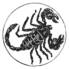 zodiac sign scorpion #vector #isolated - Sternzeichen Skorpion