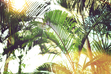 Palm trees over sky. Summer, holiday and travel concept with copy space. Palm branches with sun light effect. Background for design. Tropical jungle view
