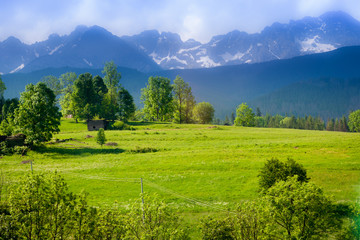 A green glade covered with trees and in the background a mountain range. A beautiful landscape.