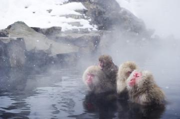 温泉に入る日本猿