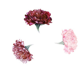 Watercolor set of retro style peonies in muted colors