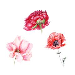 Watercolor set of red garden flowers: peony, poppy, cosmos