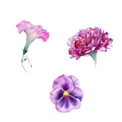 Watercolor set of garden flowers: peony, ipomoea, viola