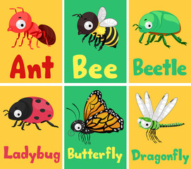Insects Flash Cards Illustration