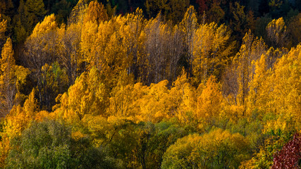 Beautiful colorful green yellow orange and red autumn trees forest on the hill.
