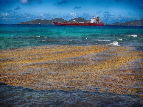 Rotting algae on Caribbean beach hurting tourism