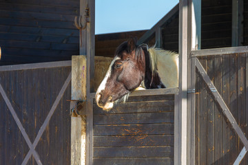 Spotted horse at stable