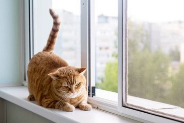 fat ginger striped cat on a white window sill looking out the window Wall mural