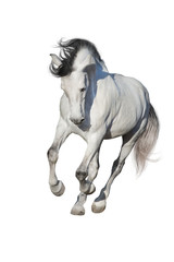 White horse run gallop isolated on white backgound