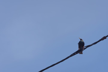 bird on a power line view from below, blue sky in background