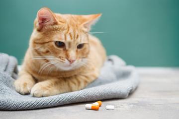 Sad red kitten and orange pills closeup