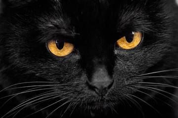 черная кошка лицо крупно