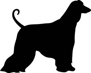 Afghan Hound silhouette black