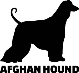 Afghan Hound silhouette real word