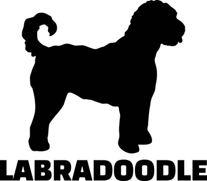 Labradoodle silhouette real word