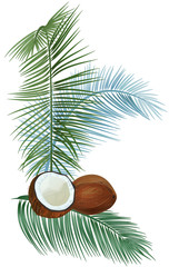 Templat for Indian festival, vertical card: brown coconuts (whole and half of nut), green leaves of coconut palm. Tropical plants, white background, vector botanical illustration for design