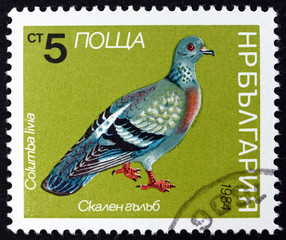 Postage stamp Bulgaria 1984 Rock Dove, Bird
