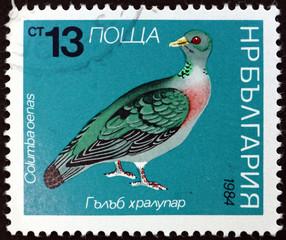 Postage stamp Bulgaria 1984 Stock Dove, Bird