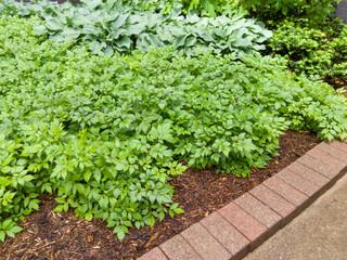 Green leafy garden plants with brick border