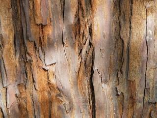 bark skin surface tree trunk