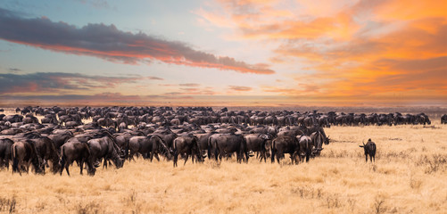 A migration of Wildebeest in Serengeti National Park,Tanzania Wall mural