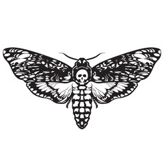 Skull moth butterfly. Death head hawk moth