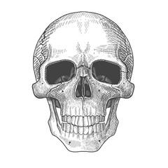 Hand drawn illustration of human skull.